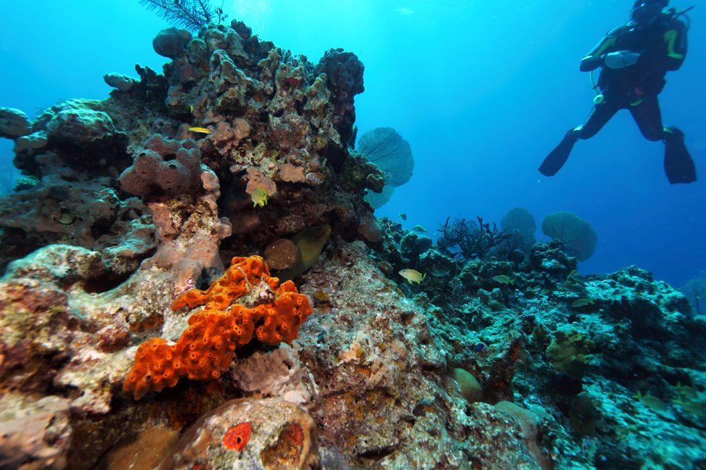 Coral Moray Eel Scuba Diving
